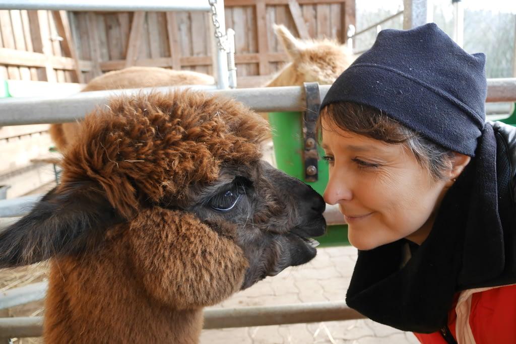 Katja van de Ven - Ich leite Ihre Alpakatour
